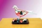 Mô hình cấu tạo Chim bồ câu
